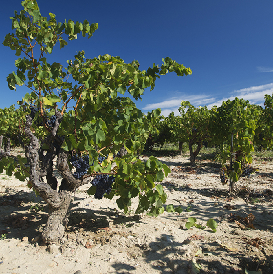 domaine-roger-perrin-chateauneuf-du-pape-image-index-01